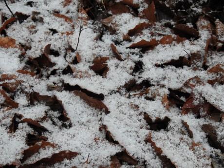 降雪ブナの葉の上20191129松之山DSCN2160