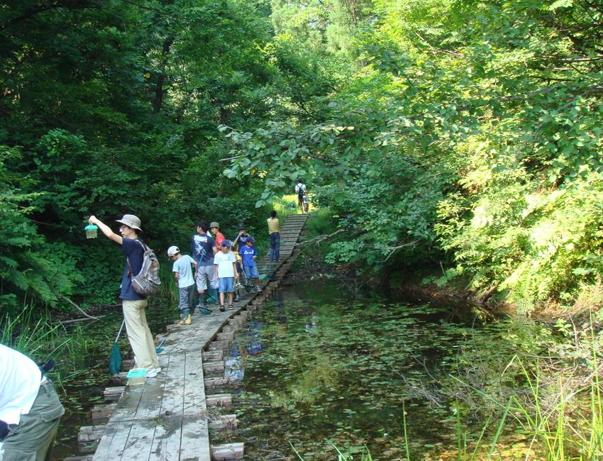 キョロロの森を散策