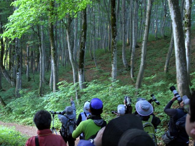 定例探鳥会 @ 「森の学校」キョロロ 駐車場集合 | 十日町市 | 新潟県 | 日本